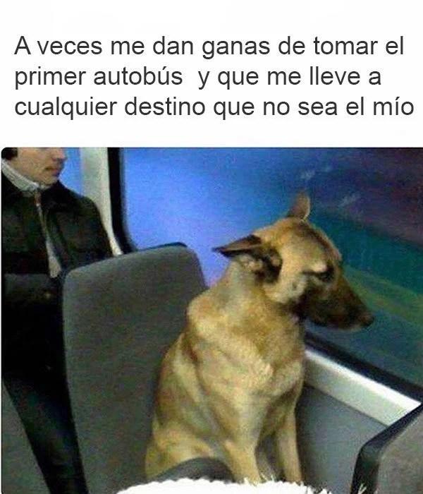 perro en un autobús triste
