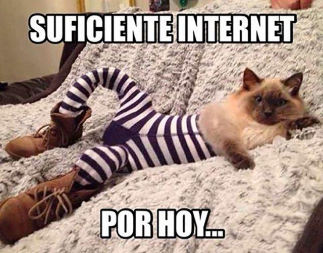 meme gatito con medias