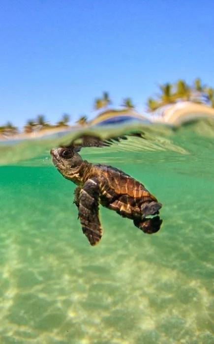 pequeña tortuga en el agua