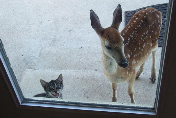 Venado y gatito aguardando que les abran la puerta