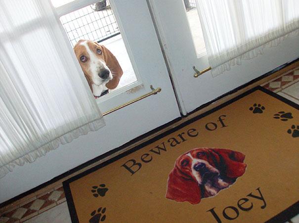 Perro orejón con mirada triste viendo hacia adentro