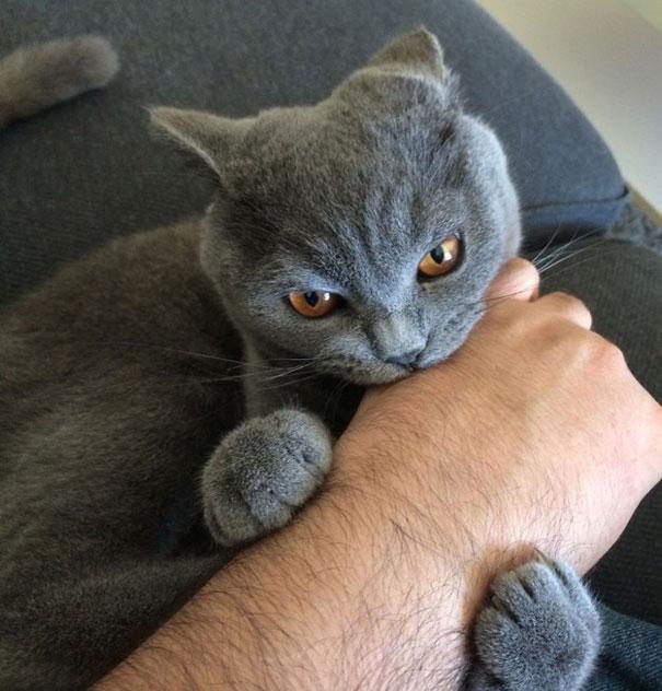 Gato mordiendo mano de su propietario