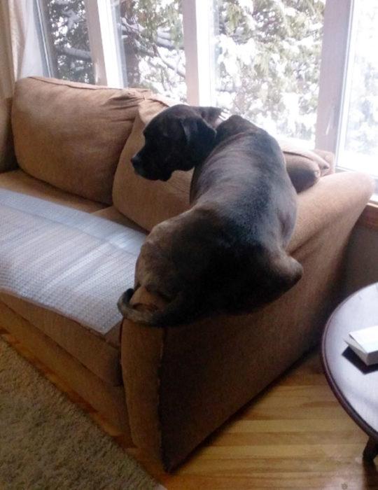 Perro acostado en el descansabrazo del sillón