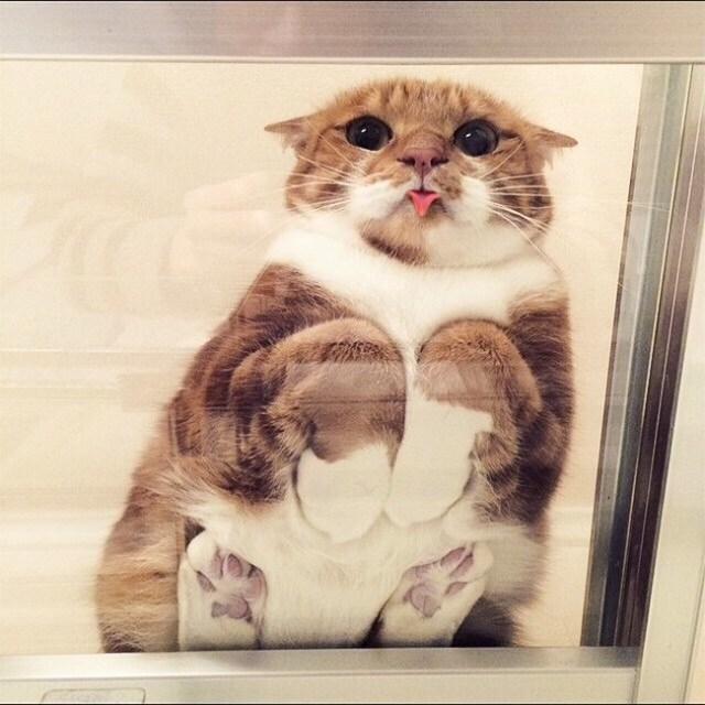 esta gatito es demasiado tierno