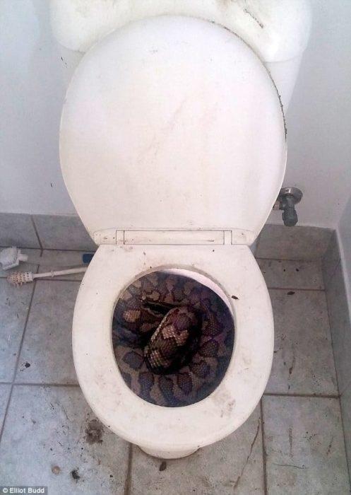 serpiente en el wc