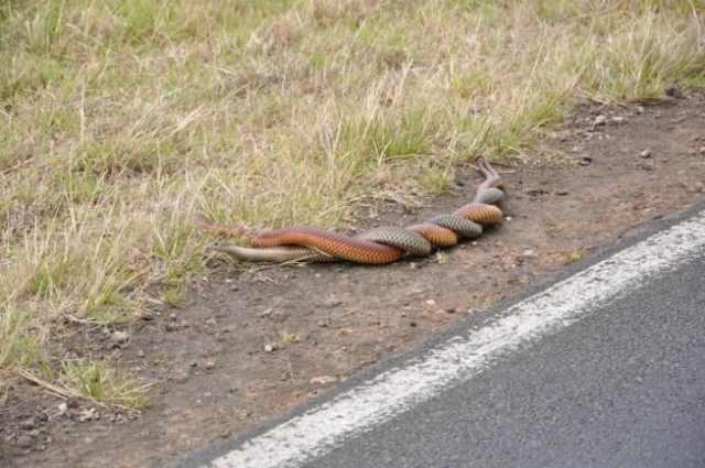 serpientes enroscadas