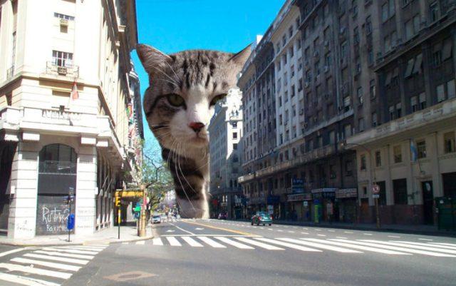 gato editado de myaor tamaño en meido de edificios
