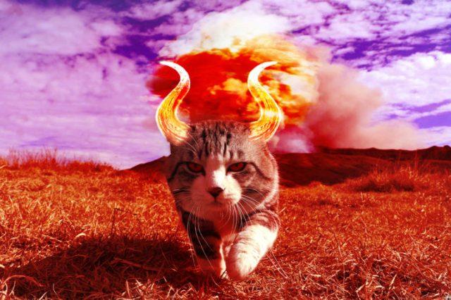 gato editado con cuernos