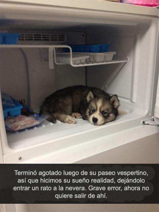husky refrigerador