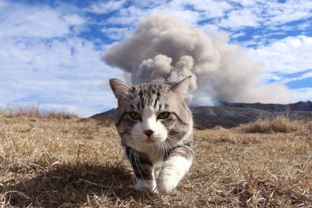 gato anda y atrás se ve una montaña con humo