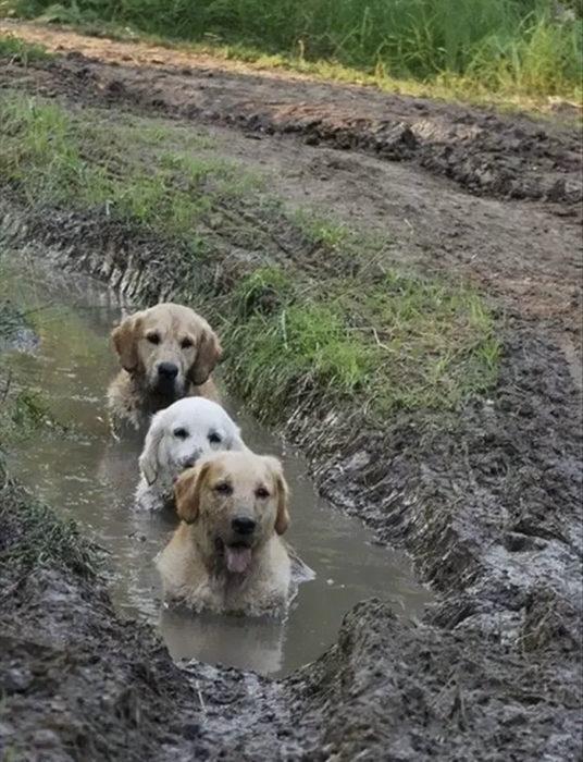 un baño de lodo entre amigos