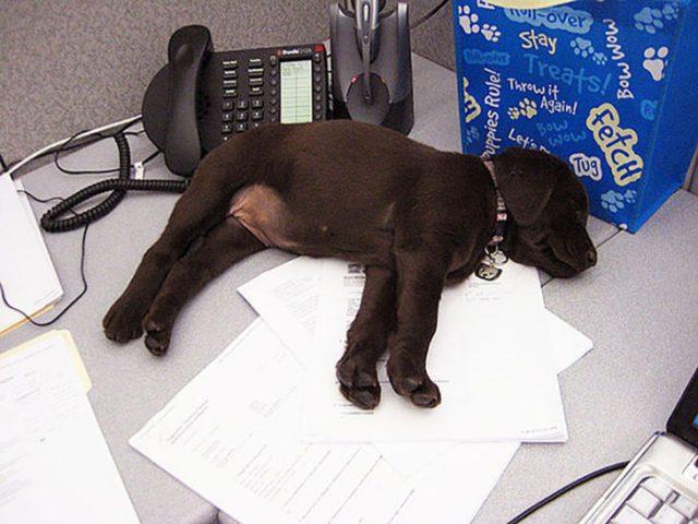 muy cansado