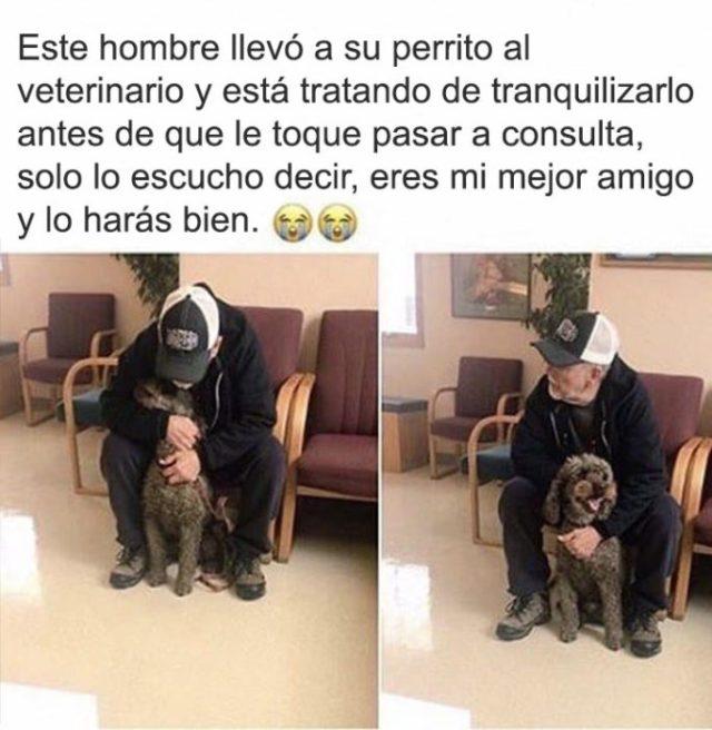 veterinario perrito