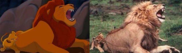 simba mordiendo el trasero de mufasa en la vida real
