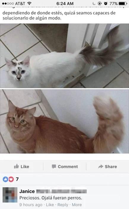 ojala que 2 gatitos fuesen perritos
