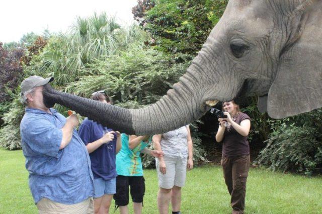 elefante con trompa en la hacia de turista