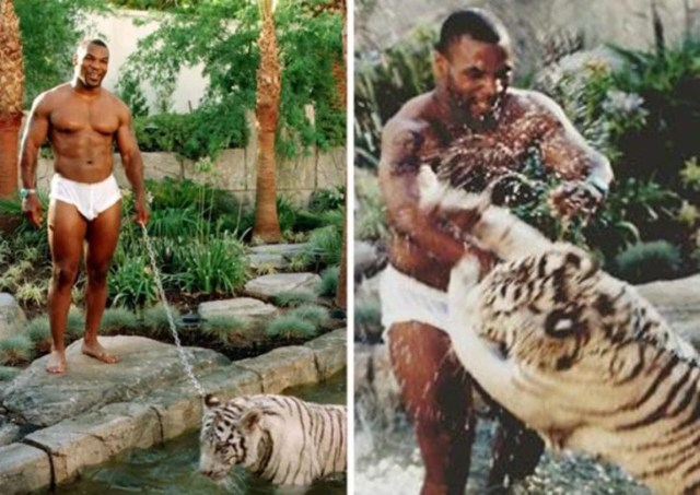 Mike Tyson con tigre