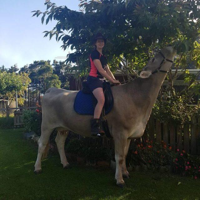 Chica montada sobre una vaca