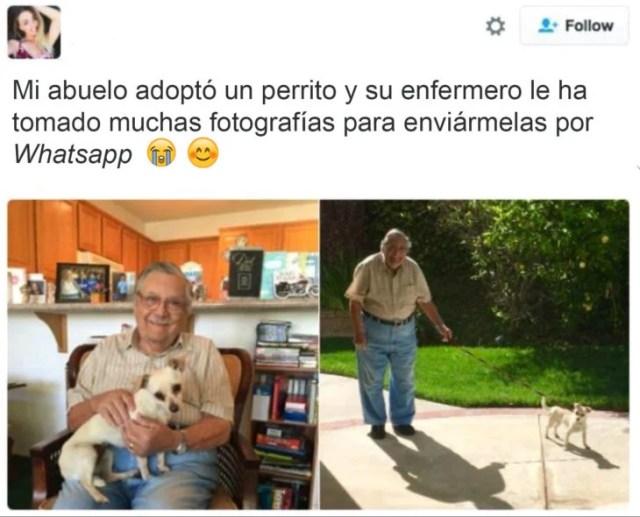 abuelo perro instagram