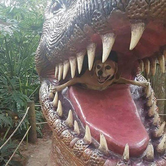 Perro saliendo del morro de un dinosaurio