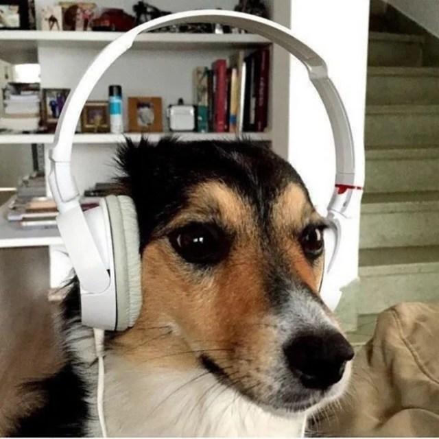 perro con unos audífonos blancos