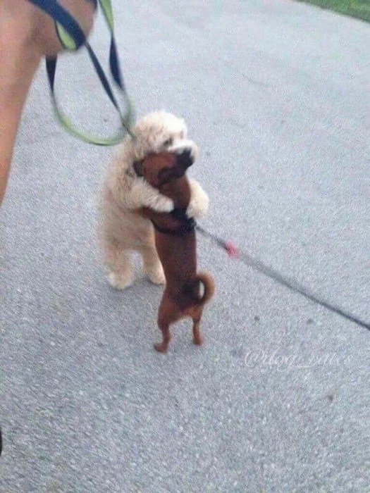 dos perritos dándose un tierno abrazo
