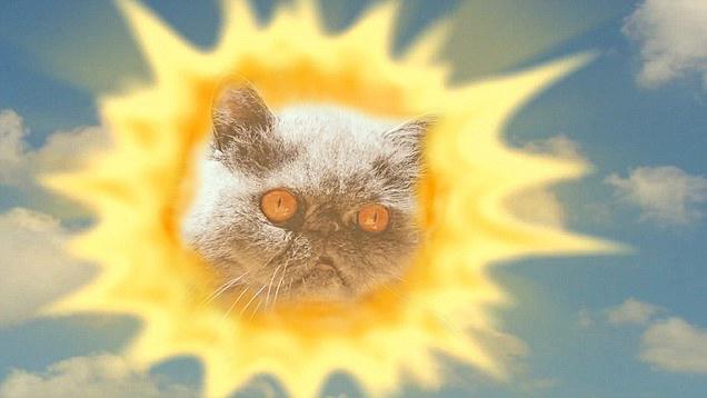 Eres el gatito que alumbra mis días