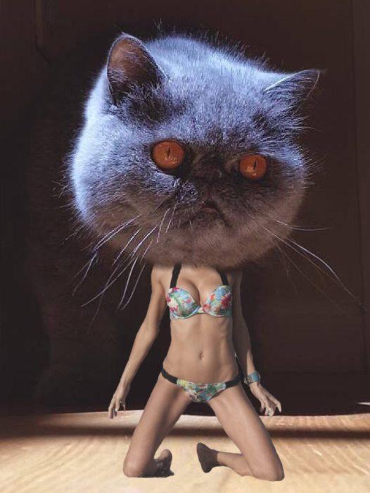este gatito es sexy y lo sabe