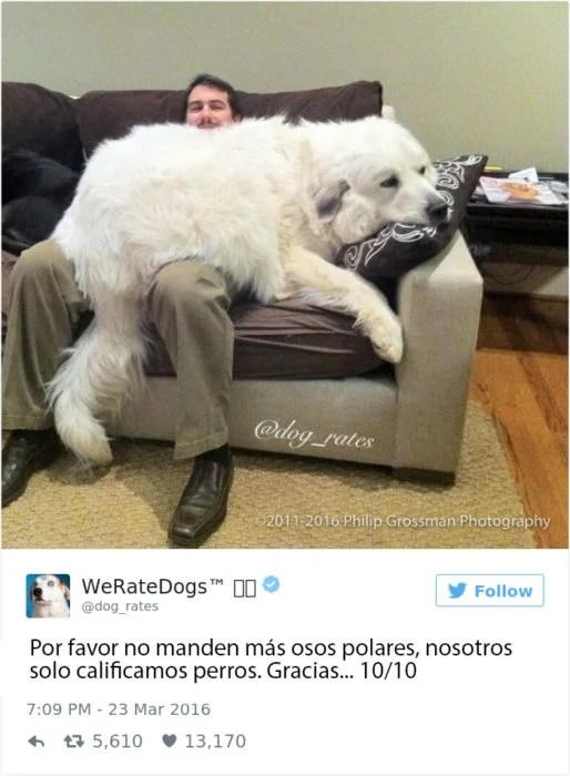 enorme perroso