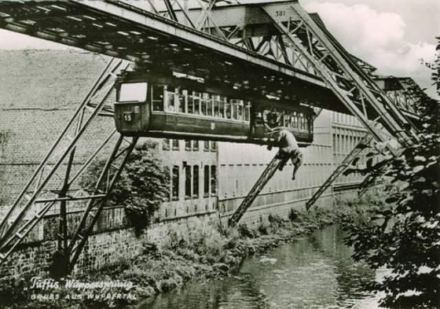 Elefante cae al río