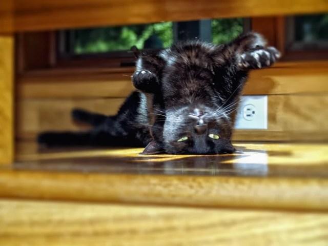 posición: gatito invertido