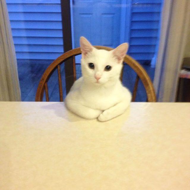 alguien está aguardando su comida