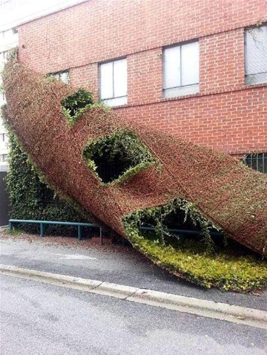 edificio perfecto capa de musgo