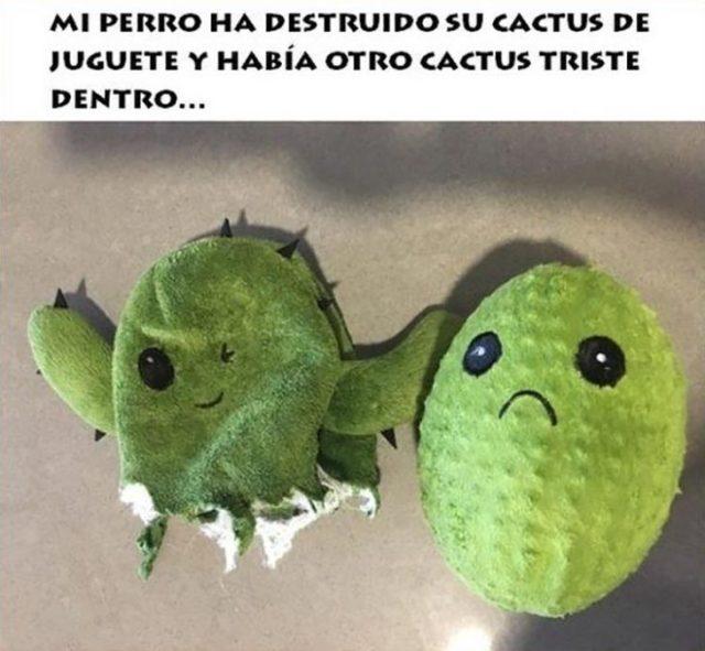 cactus triste dentro de juguete de cactus