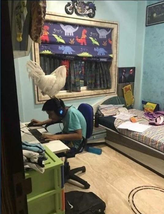 chico haciendo los deberes con una gallina sobre su cabeza