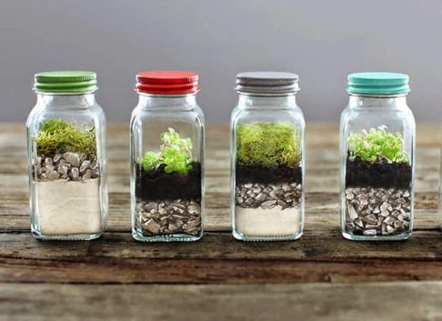 frascos utilizados para ser terrarios