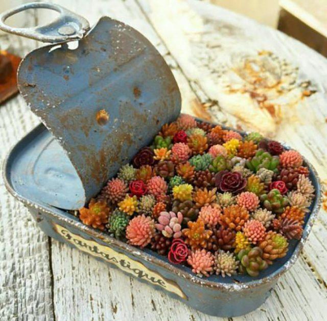 lata de sardinas usada para poder colocar plantas y usarse de terrario