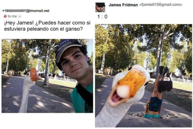 Imagen editada en photoshop que muestra que un ganso gano una pelea
