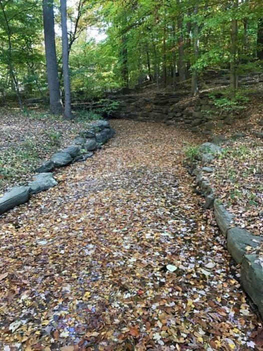 arroyo cubierto de hojas caídas