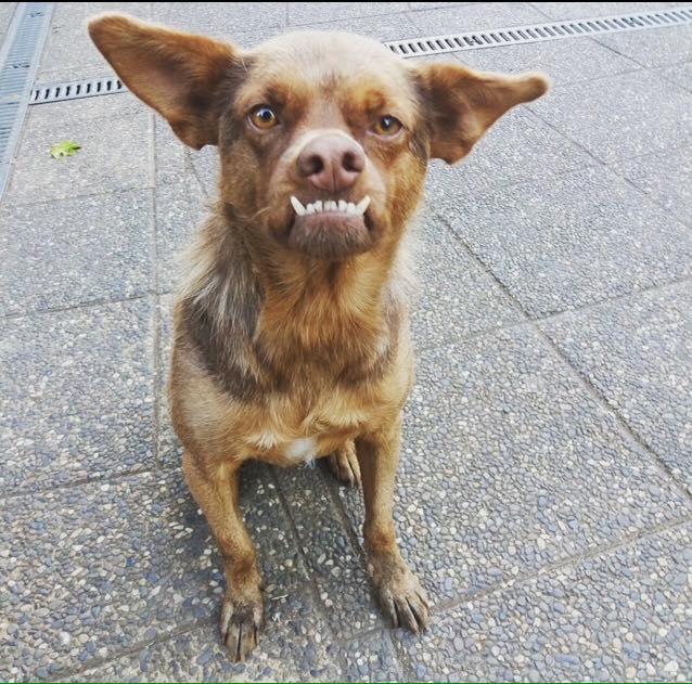 chilaquil animal feo