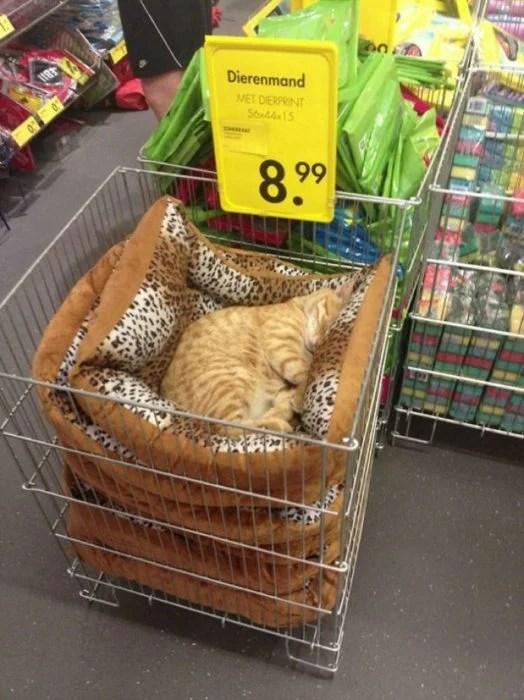 Gato dormido en cama para gatitos que se vende en tienda