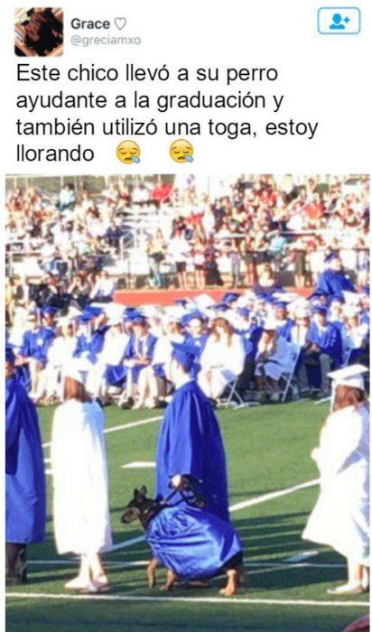 Graduación perro