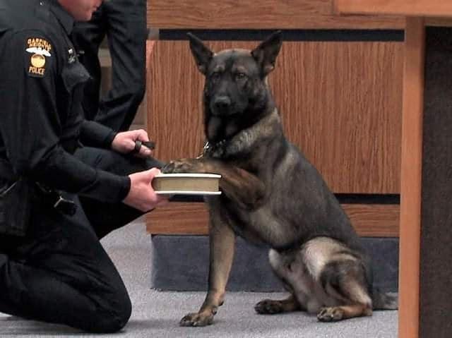 perro diciendo la verdad ante el juez