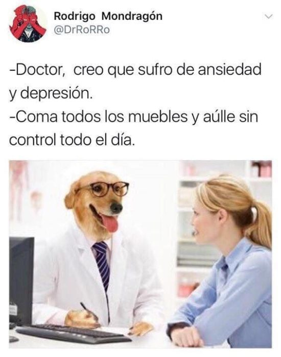 muerda los muebles memes Dr. perro