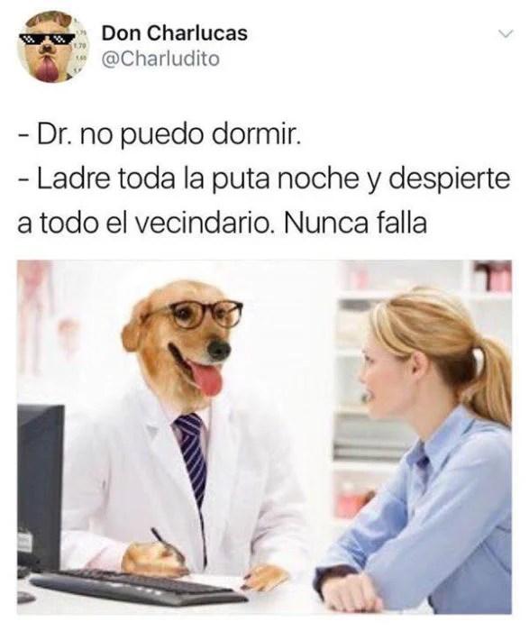 ladre toda la noche memes Dr. perro