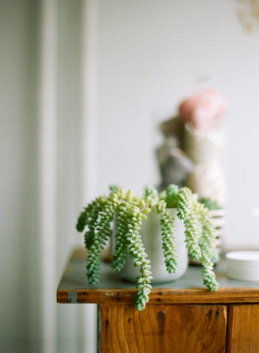 Sedum morganianum planta