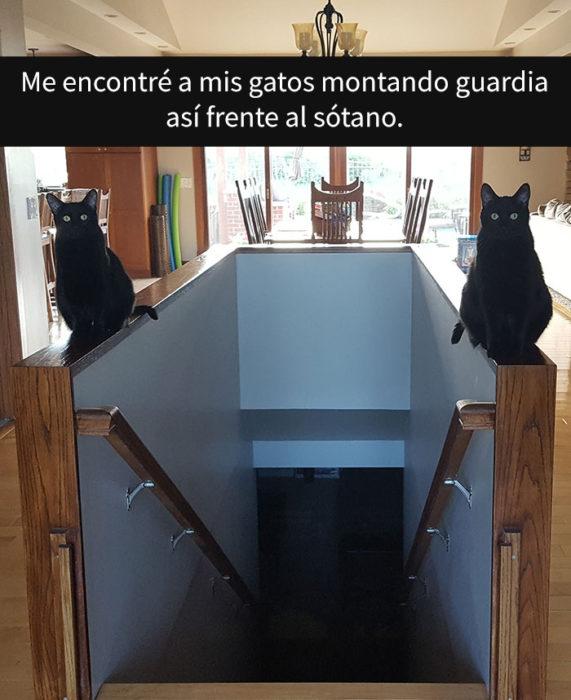 DOs gatitos negros cuidando la entrada