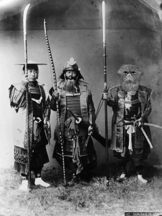 samurai gatito