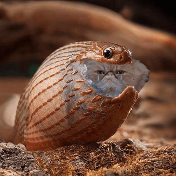 serpiente gato
