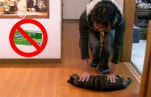 usando gatito cual mopa